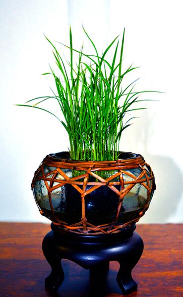 稻米2.jpg