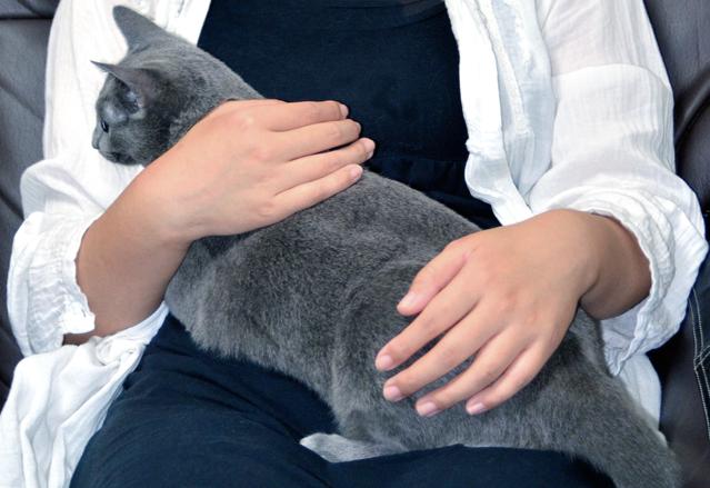 貓15.jpg